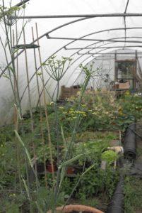 tiny woodstove garden