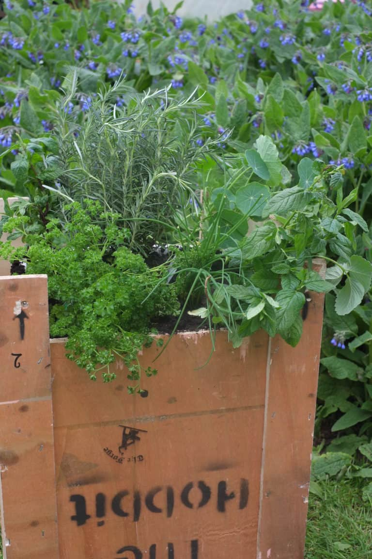 Recycle your small stove packaging – Turn it into a small garden